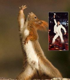 Squirrel Imitates John Travolta