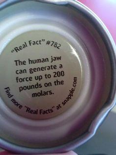 Snapple cap fact! Real Facts, Wtf Fun Facts, Random Facts, Dental Humor, Dental Hygiene, Snapple Facts, Random Trivia, Boy Facts, Learn Earn