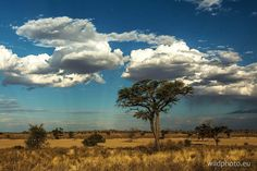 Kgalagadi Africa Travel, Us Travel, Watercolour Painting, Oil Paintings, Paint Colors, Safari, Landscapes, Creations, Traveling