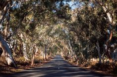 Straßen im Barossa Valley Südaustralien Parks, Beste Hotels, Roadtrip, Travelogue, South Australia, South Africa, Attraction, Country Roads, Tips