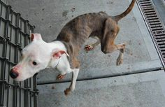 Everyone has bailed on Mama.She needs a foster as soon as possible.She is at a vet in Brooklyn, but needs to leave tomorrow.She is not socialized so we recommend no cats or small dogs.For app go to www.nycsecondchancerescue.org