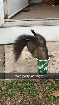 This squirrel who had a pretty crazy evening. | 19 Animal Snapchats That Will Make You Laugh For No Reason