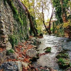 Livadeia (Leivadia) / Viotia #livadeia #leivadia #viotia #greece #river #nature #autumn #autumnleaves #trees #hellas #ellada #elladara #pigeskryas