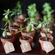 Mini seedlings along the table scape. We LOVE the mini seedling favours in this intimate homespun wedding! love it! just not succulents.