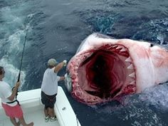 OMG! That can't be real can it??? (That guy with the fishing pole looks a little too calm!!)