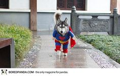 Pets for Halloween https://www.facebook.com/LouLouBlog