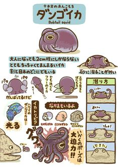 Nature Animals, Animals And Pets, Cute Animals, Fish Drawings, Animal Drawings, Weird Creatures, Sea Creatures, Japanese Animals, Animal Graphic