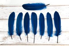 Large Navy Blue Goose Wing Feathers - (Dyed) Goose Feathers, Dark Navy Blue, Quilling, Christmas Crafts, Wings, Hair Accessories, Shapes, Nature, Navy Blue