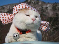 Shironeko-cat-part2-8.jpg (640×479)