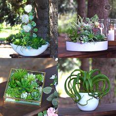 Suculents - silk flowers. Silk Flowers, Plants, Planters, Plant, Planting