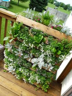 Deck pallet garden with flowers, herbs & edibles