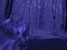 Wolves purple