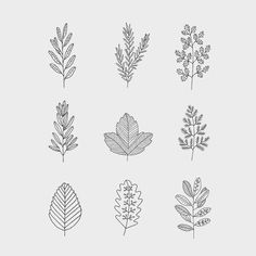Botanics designed for @wholefoods #illustration #design #wholefoodsmarket #botanic #illustrate #drawings #rynfrank #details