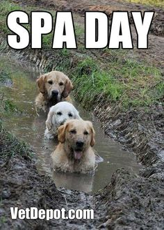 Spa Day! My golden would do this in a canal ... The neighbors called her swamp dog!