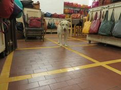 Sophie, Store Mascot at T Nobile Leather Shop in Rome, Italy #IrresistiblyItalian