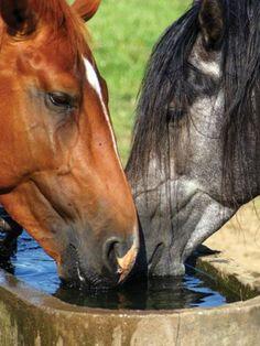 #HORSE#