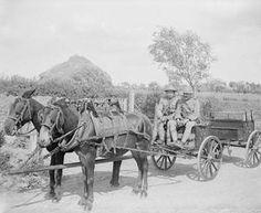 WWI, 24 June 1917; Portuguese Army mule-drawn ammunition wagon, near Locon. ©IWM  (Q 5546)