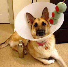 Dog wearing cone costume martini glass