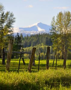 Roman Nose Peak, part of the Selkirk Mountain Range in North Idaho looms over an evening pasture in my neighborhood.