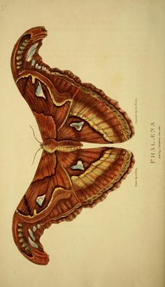 Arcana, or, The museum of natural history - Biodiversity Heritage Library