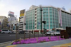 I love the colors in this photo that I've taken last April (2012) in Shizuoka City.