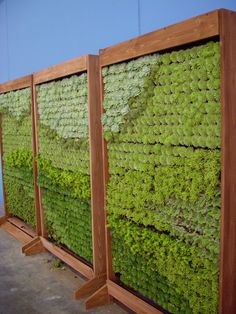 """If you don't know what a living wall is, then start here with this article that explains how """"green walls or living walls are vertical structures that are attached to the exterior or interior of a building.""""They're also sometimes called vertical gardens, and you'll learn here how they differ from other green façades, such as ivy walls. Continue to explore this website, Green Over Grey, especially the photo gallery that offers plenty of inspiration for those who ..."""