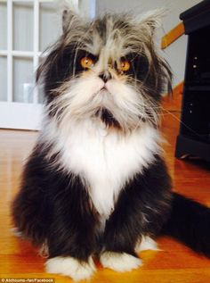 Who are you looking at? Atchoum the cat has taken the world of social media by storm with his piercing gaze