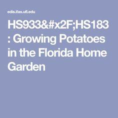 HS933/HS183: Growing Potatoes in the Florida Home Garden