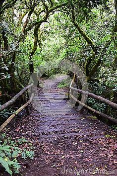 Path in the forest thicket stock image. Image of trees - 111060209 Paths, Exotic, Country Roads, Image