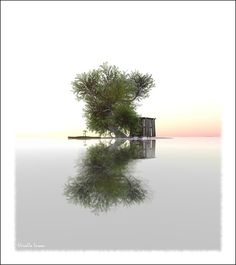 The Tree, the Cant and the Island by   HivaOa_Insoo     Love the simplicity of this image.