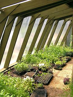 Permaculture Experts Create an Ecosystem in Whitefield Small Greenhouse, Greenhouse Plans, Greenhouse Wedding, Growing Herbs, Growing Flowers, Aquaponics System, Hydroponics, Aquaponics Greenhouse, Permaculture