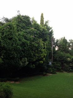 Pretoria, Hotel Spa, Boutique, Plants, House, Haus, Plant, Home, Houses