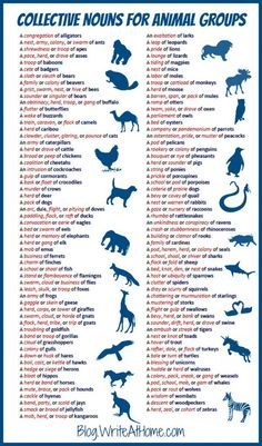 Collective nouns for animal groups - English vocabulary English Words, English Grammar, Teaching English, English Language, Language Arts, English Idioms, Foreign Language, English Writing Skills, English Lessons