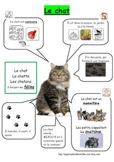 Fiches sur le chat Animal Activities, Reading Activities, Splat Le Chat, Core French, French Education, French Classroom, French Immersion, Animal Facts, French Lessons