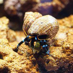 Pesci e invertebrati che rovinano i coralli
