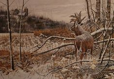 Wildlife art prints plus original paintings with a wide selection from ArtBarbarians.com located in Minnesota. Mule Deer Hunting, Whitetail Hunting, Hunting Art, Hunting Stuff, Wildlife Paintings, Deer Paintings, Wildlife Art, Original Paintings, Whitetail Deer Pictures