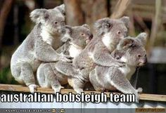 koala congo line - Koala Funny - Funny Koala meme - - koala congo line Koala Funny koala congo line The post koala congo line appeared first on Gag Dad. The post koala congo line appeared first on Gag Dad. Koala Meme, Funny Koala, Baby Animals, Funny Animals, Cute Animals, Wild Animals, Animal Funnies, Animal Babies, Funny Animal Photos