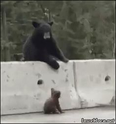 """""""What did i tell you about playing on the roadside?!"""" Scold the mama bear to the bear cub"""