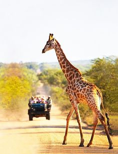 Safari South Africa.