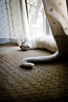 cat snake by lulu.photo, via Flickr