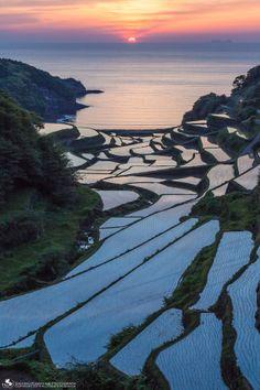 Sunset at the terraced rice fields, Hamanoura, Saga, Japan 浜野浦