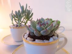 Cup // M Tea Pots, Succulents, Cups, Play, Glasses, Eyewear, Mugs, Eyeglasses, Tea Pot