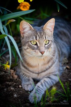 """""""A cat likes to hear you calling him. He sits in a bush a yard from you... and listens."""" - Pam Brown ☺"""