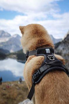 Shiba Inu Chicago Pup Flag Leash Holder Hook