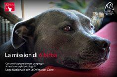 #6Birba per #LegadelCane - continua l'#iniziativa Un click con il cuore per aiutare gli #animali in difficoltà