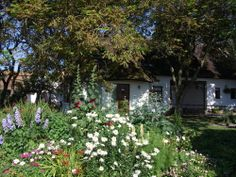 Six exclusive 300 year old luxury thatched holiday cottages in Ireland. Set on the beach front in the tranquil surroundings of large organic flower gardens. Cottages Ireland, Luxury Holiday Cottages, Photo Competition, Garden Cottage, Luxury Holidays, Beach, Flowers, Plants, Summer