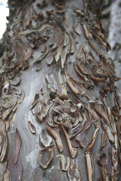 écorce d'arbre (détail 3 & fin)
