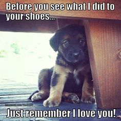 pictures of cute animals with sayings - Google Search