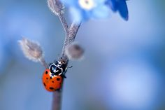 Ladybird by Danny Perez on 500px
