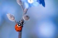 Ladybird by Danny Perez on 500px